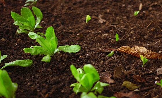 Bildet kan inneholde: jord, grønn, anlegg, blad, blomst.